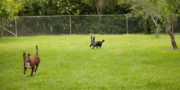 Dogs running about