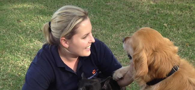 Best Dog Boarding Kennels Sydney