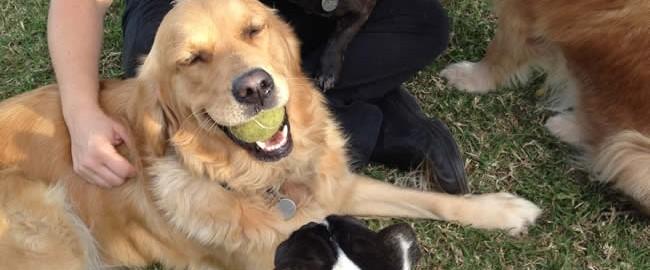 Dog Boarding Kennels At Sydney Pet Resort